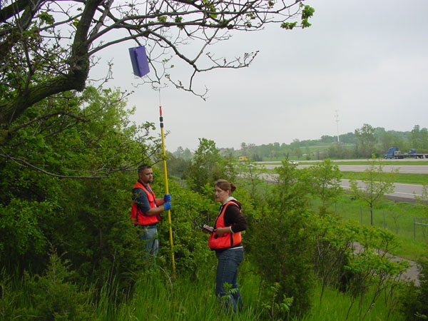 Bob Bade and Renae Smith, survey technicians with the Minnesota Department of Agriculture, hanging emerald ash borer traps at the St. Croix Travel Information Center on Interstate 94 between Minnesota and Wisconsin.